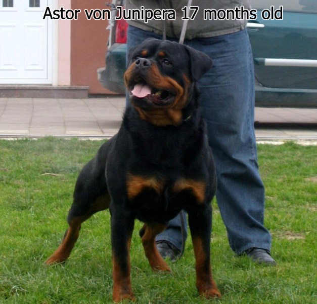 Astor von Junipera 17 months old